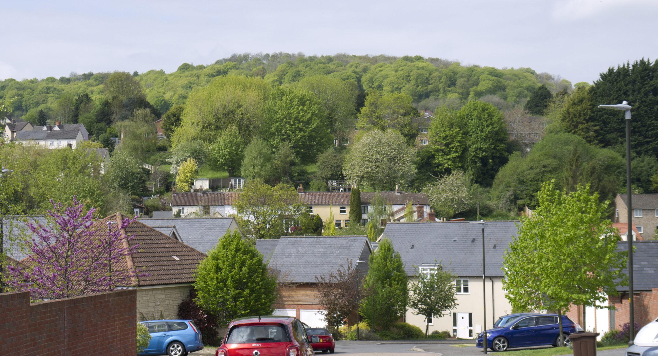 Enhancing Tree Coverage through a Neighbourhood Plan